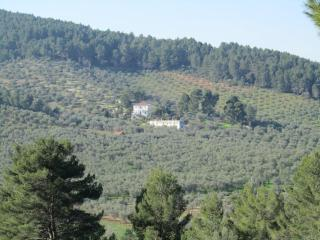 Vallecoppa Olive Estate surrounded by Foresta Umbra