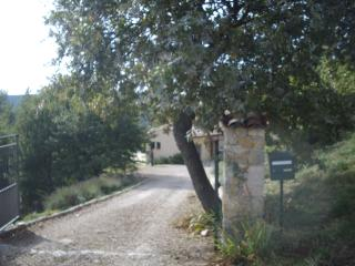 Entrance drive from the road - crooked oak, and lavender border
