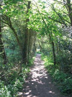 Path through woods to the beach