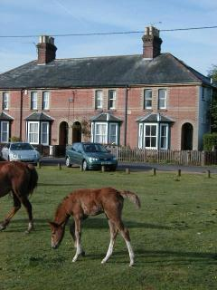 Waters Green cottage with foal