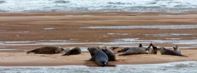 Seals at Newburgh