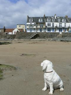 Dog looking at The Beach House