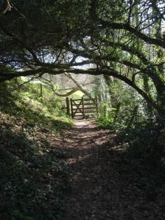 One of the unspoilt, magical woodland walks along the Percuil River near Place Manor