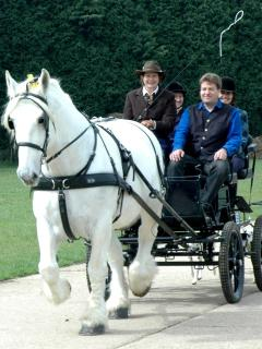 Experience the thrill of a carriage drive with our beautiful French draft horse Nobel du Desir