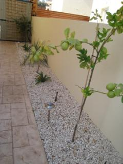 Outside Garden Area & Lemon Tree for your G & T