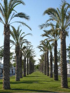 Tree lined avenue on Resort