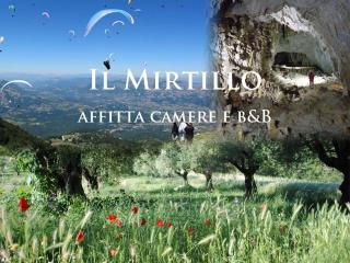 IL MIRTILLO