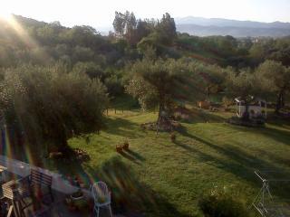Il giardino visto dall'alto all'alba