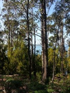 Walk trails through the property