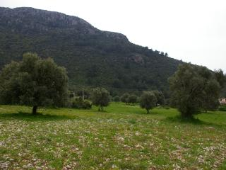 Olive groves and mountains at the back of Olideniz Heights