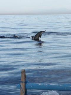 Dolphins close to villa