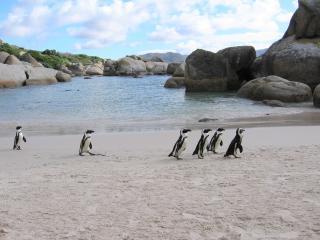 Cape Town:  Boulders Skye, Simon's Town