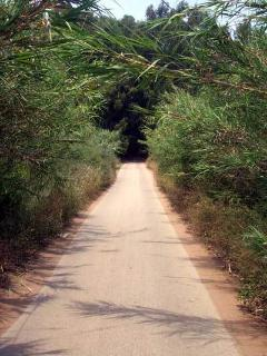 The bamboo lined  road to the beach 5 minutes walk  away