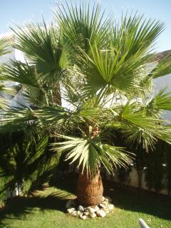The mini palm tree in the garden!