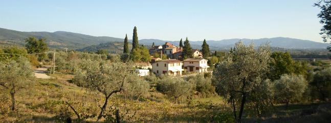 natura e olivi intorno alla villetta