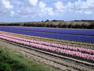 www.lesgitesdetronoen.fr, Saint-Jean-Trolimon