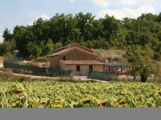 Casa Nestore appartamento oliva, Castiglione della Valle