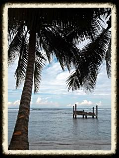 Ocean view...
