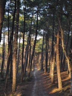 The calm and beautiful Landes Forest