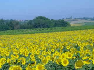 Surrounded by vineyards, sunflowers & rolling countryside