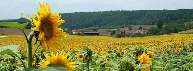 Stigny and sunflowers