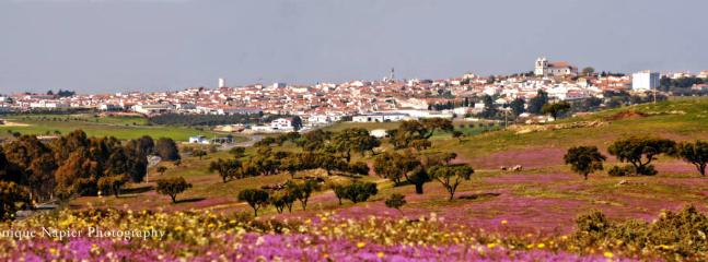 Castro Verde and its carpets of colour during spring time