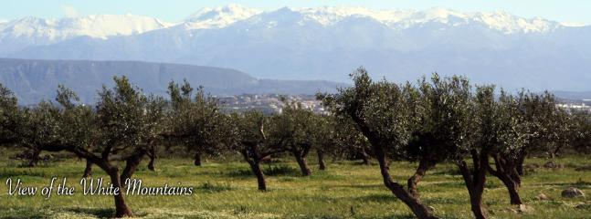 Local olive grove with the White Mountains behind