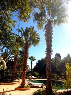 Farniente sous les palmiers