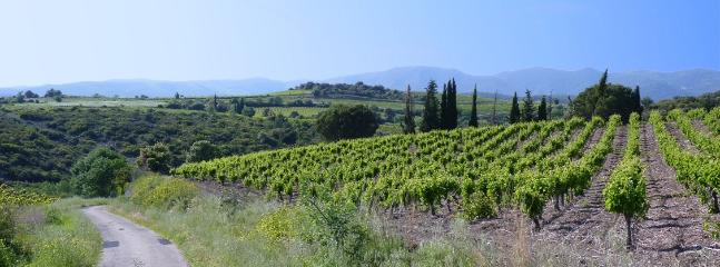 Vineyards close to La Mouline