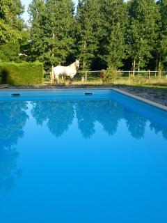 piscine 5 m x 11m