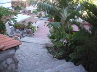 Our   tropical garden offering natural shade and stunning views