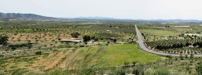 Olive Groves near Uleila del Campo