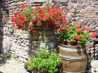 Geraniums in bloom hanging outside the wine press building