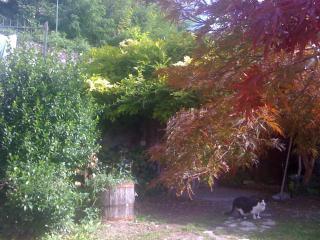 Garden with lush vegetation