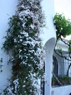 April to May Incredible smell from the jasmin in front of the entrence