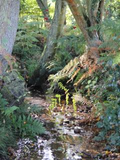 Tranquil New Forest stream