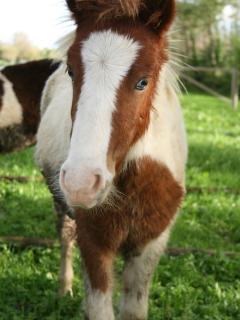 mignolo, il nostro pony