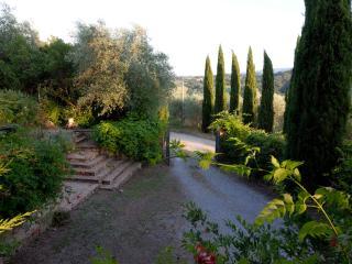 L'accesso alla casa, tra cipressi e campi di girasole accoglie nel giardino a frutteto e roseto