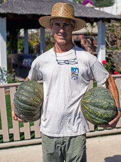 Enrique collecting pumpkins