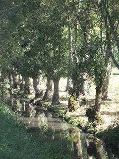 les berges d'un canal au Mazeau