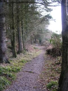 Balloch wood walking trail