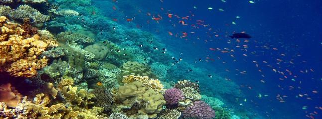 Tor Paterno diving