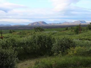 Bjork in Hekla area, Hvolsvollur