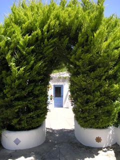 lemon cypress arch