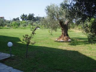 Olive Trees Place- ELEONAS