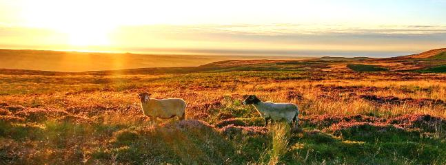 An evening stroll on the Moor