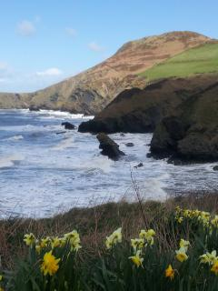 Springtime on the coastal path, next to Llangrannog beach