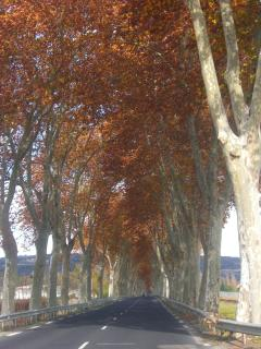 Avenue into Limoux