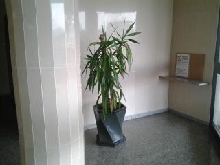 ingresso edificio in cui si trova l'appartamento