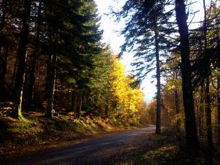 l'automne dans les bois...